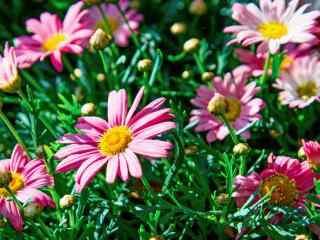 阳光普照群花盛开