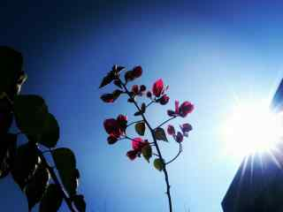 花朵摄影图片唯美