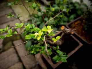 绿色盆栽植物护眼