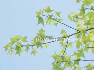 清新唯美的植物图片壁纸
