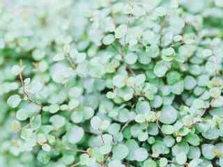 唯美的绿色植物图片壁纸