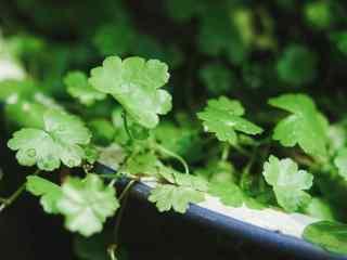 绿色清新好看的植物图片