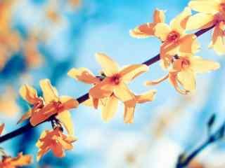 阳光下黄色的小花