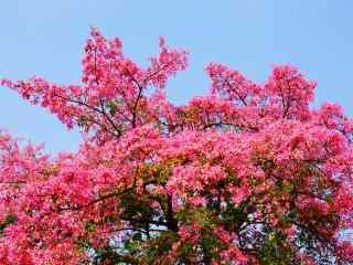 秋日唯美的美人树