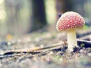 野生蘑菇小清新图