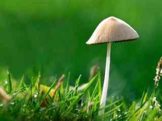 可爱的野生蘑菇图