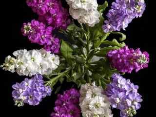 美丽的紫罗兰花束桌面壁纸