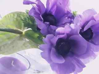 优雅的紫罗兰花桌面壁纸