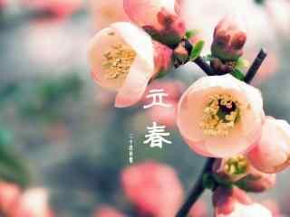 二十四节气之立春唯美粉嫩的梅花图片