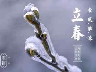 2017年立春节气之被冰封的梅花花苞