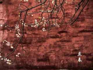 2017年立春节气唯美梅花高清桌面壁纸
