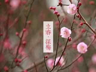 立春特制节气壁纸之唯美梅花图片