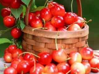 健康营养的樱桃图片桌面壁纸