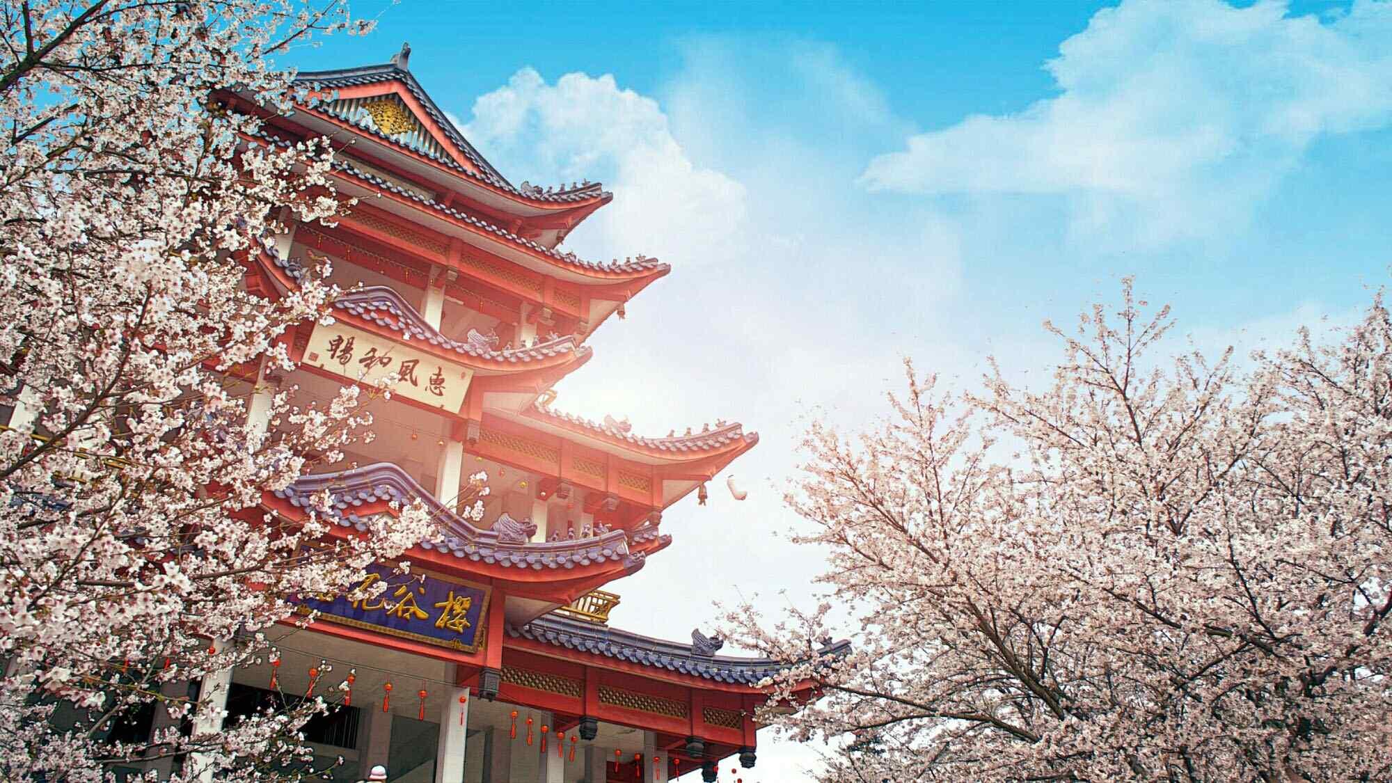 高清樱花树-二次元唯美樱花壁纸-下载壁纸图片唯美动态壁纸-二次元