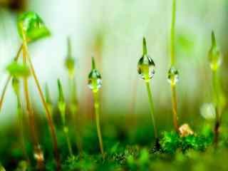 绿色小青苔长出了嫩芽桌面壁纸