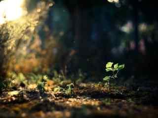 唯美阳光照射倔强小草桌面壁纸