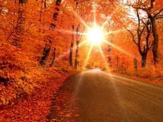 阳光穿过枫叶林桌面壁纸