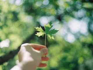 绿色唯美树叶护眼桌面壁纸