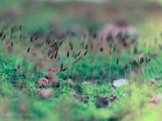 青苔上生长的小苗桌面壁纸