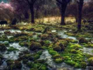 山涧溪水石上的青苔桌面壁纸