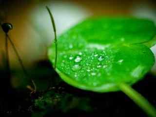 唯美青苔上的绿叶桌面壁纸