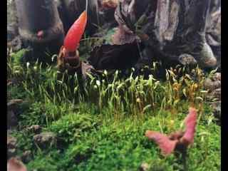 青苔树上生长的红叶桌面壁纸
