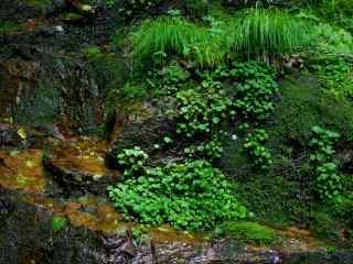 岩石上面的青苔桌面壁纸