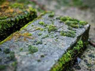 石板上郁郁葱葱的青苔桌面壁纸