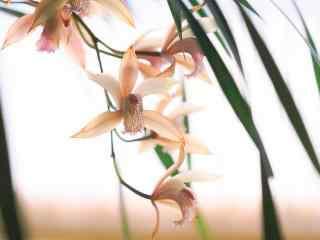 垂挂在枝头的兰花桌面壁纸