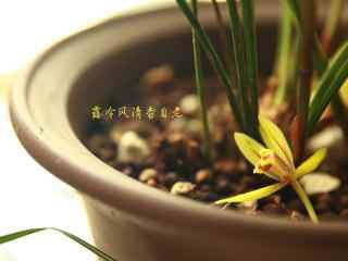 掉落在花盆的兰花桌面壁纸