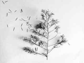 文竹创意拍摄黑白桌面壁纸