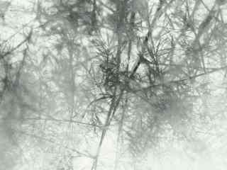 仙气缭绕的文竹桌面壁纸