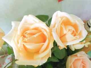 妇女节—香槟玫瑰开放桌面壁纸