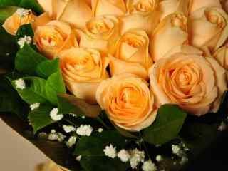 妇女节—香槟玫瑰桌面壁纸