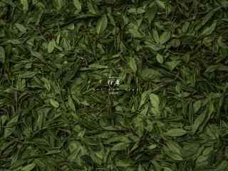 茶文化—小清新醇香绿茶桌面壁纸