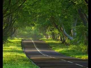 公路穿过树林桌面