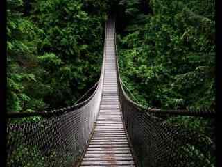 吊桥穿过树林桌面