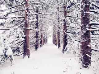 植树节—大雪下的
