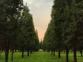 植树节—夕阳下的