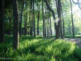 植树节—阳光穿透