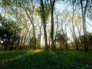 植树节—光束穿过