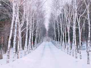 植树节—白雪覆盖