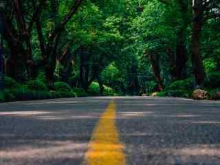 植树节—公路延伸
