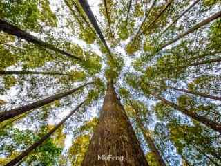 植树节—郁郁葱葱