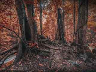 植树节—树林里盘