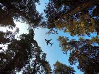 植树节—树林上空