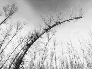 植树节—弯了腰的