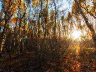 植树节—秋日里阳