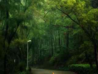 植树节—公路穿过