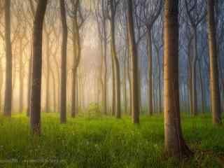 植树节—晨雾弥漫